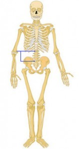 Smart Rehabilitation Practices for Recurrent Low Back Strain