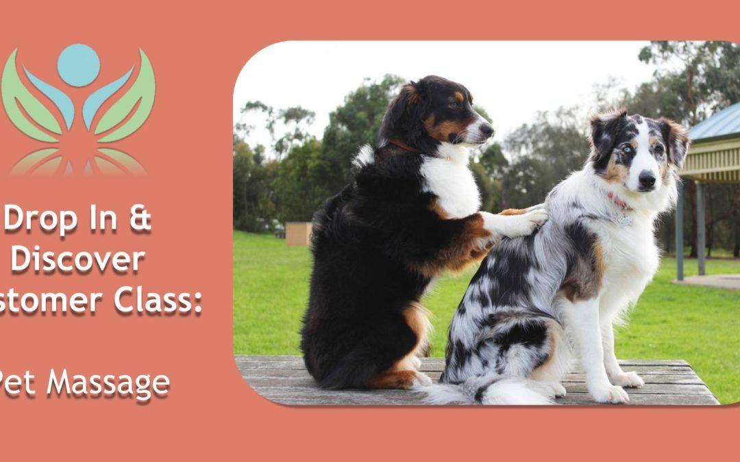 Pet Massage
