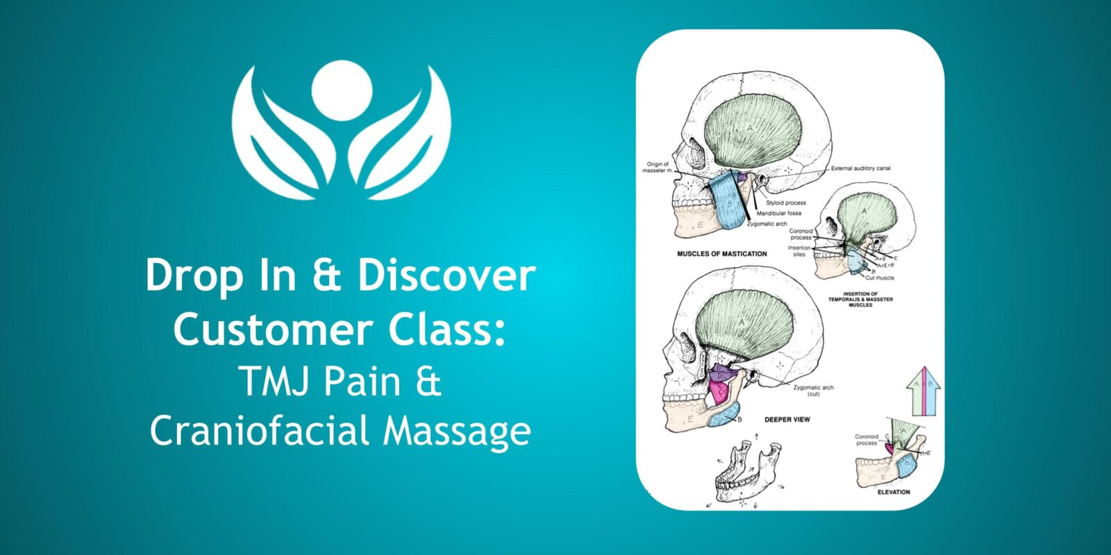 Tmj Pain And Craniofacial Massage Hands On Health